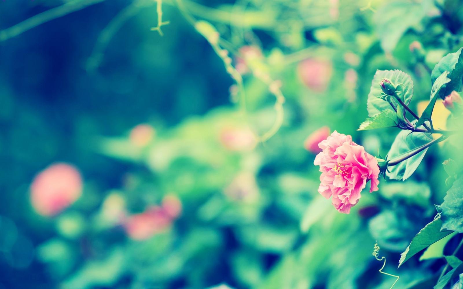 Фото для обложки фейсбук цветы