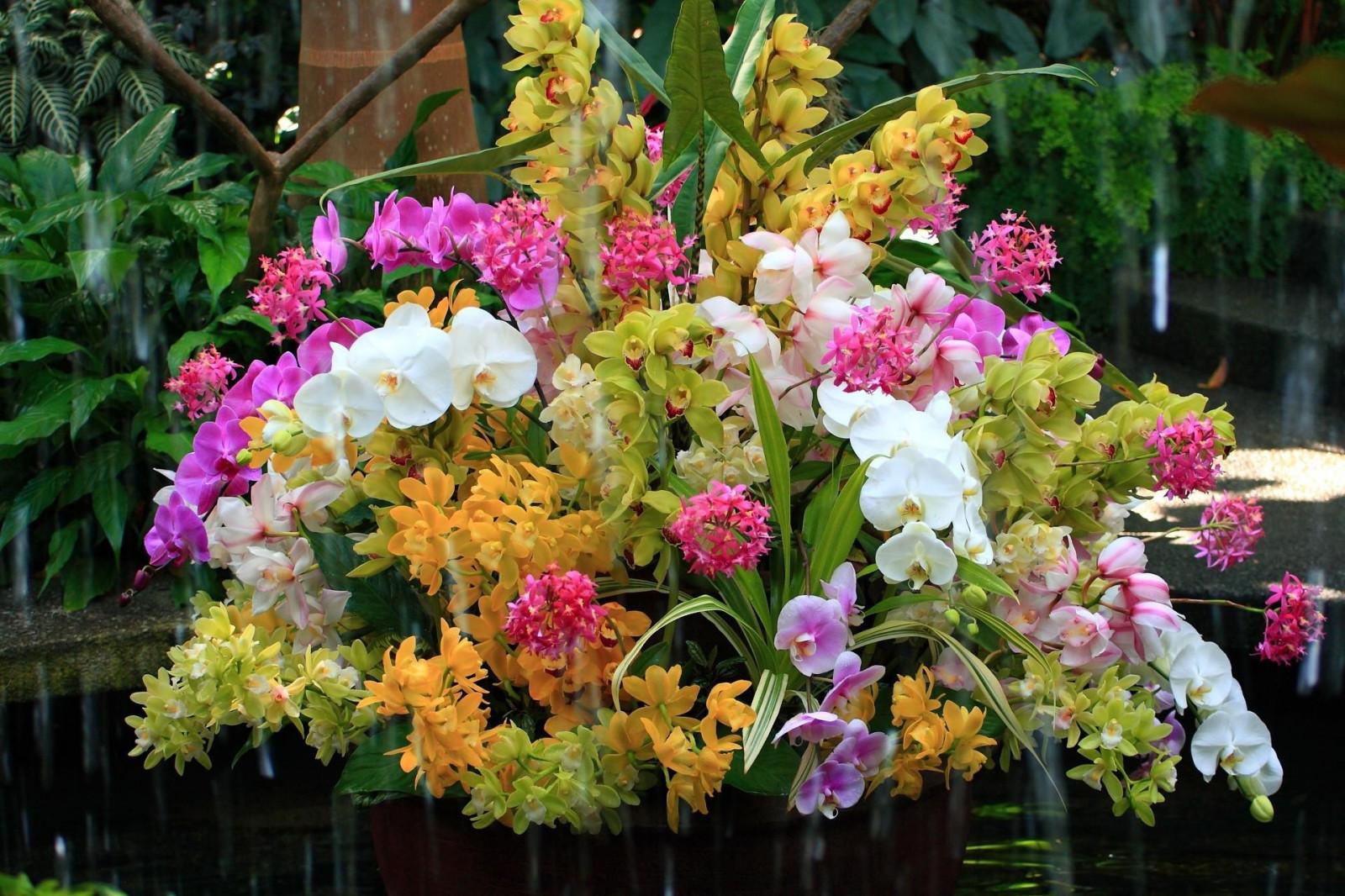Хочу харчо! - Страница 3 Orchids_flowers_flower_water_exotic-683252