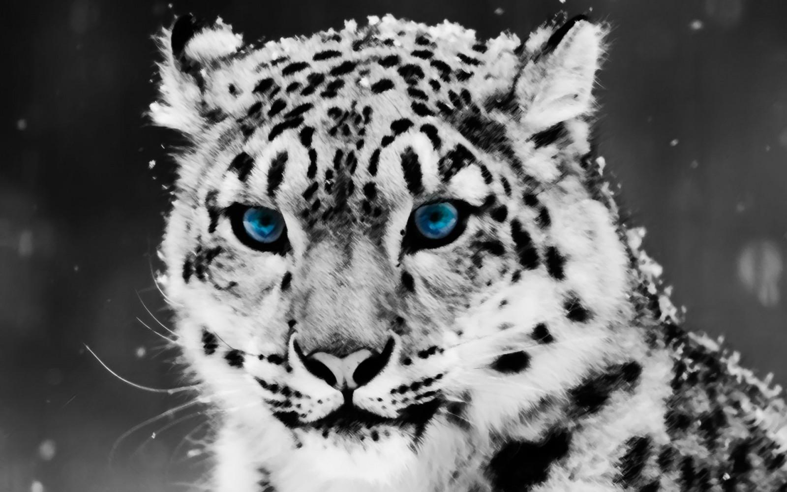 Шаблон для photoshop снежная королева