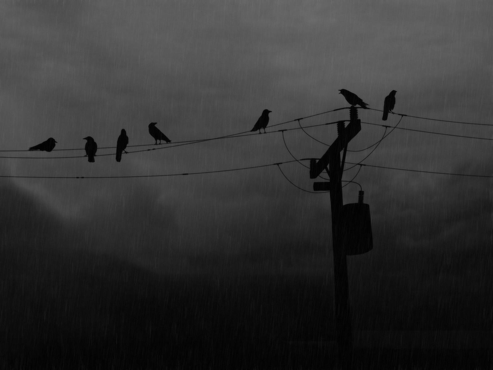 Wallpaper Birds Rain Silhouette Morning Wind Fence Utility