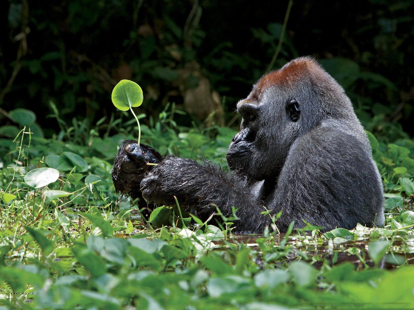dschungel tiere dreizehn hintergrundbilder - photo #18
