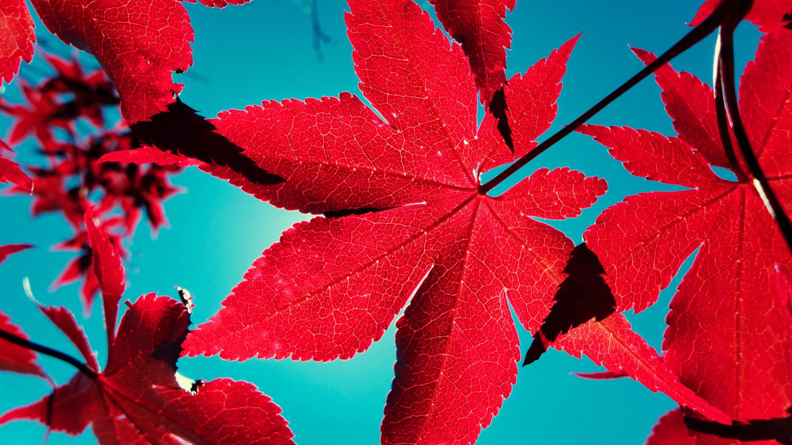 Acero Blu Giapponese sfondi : blu, ombra, rosso, cielo, sole, fuoco, giapponese