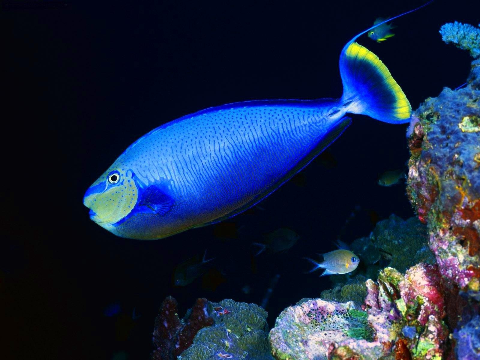 океаническая рыба названия и фото разнообразных баночек