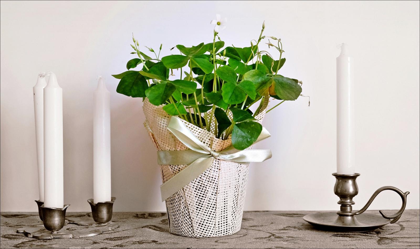 Fond d 39 cran vase pot de fleur flore table product - Table plante ...
