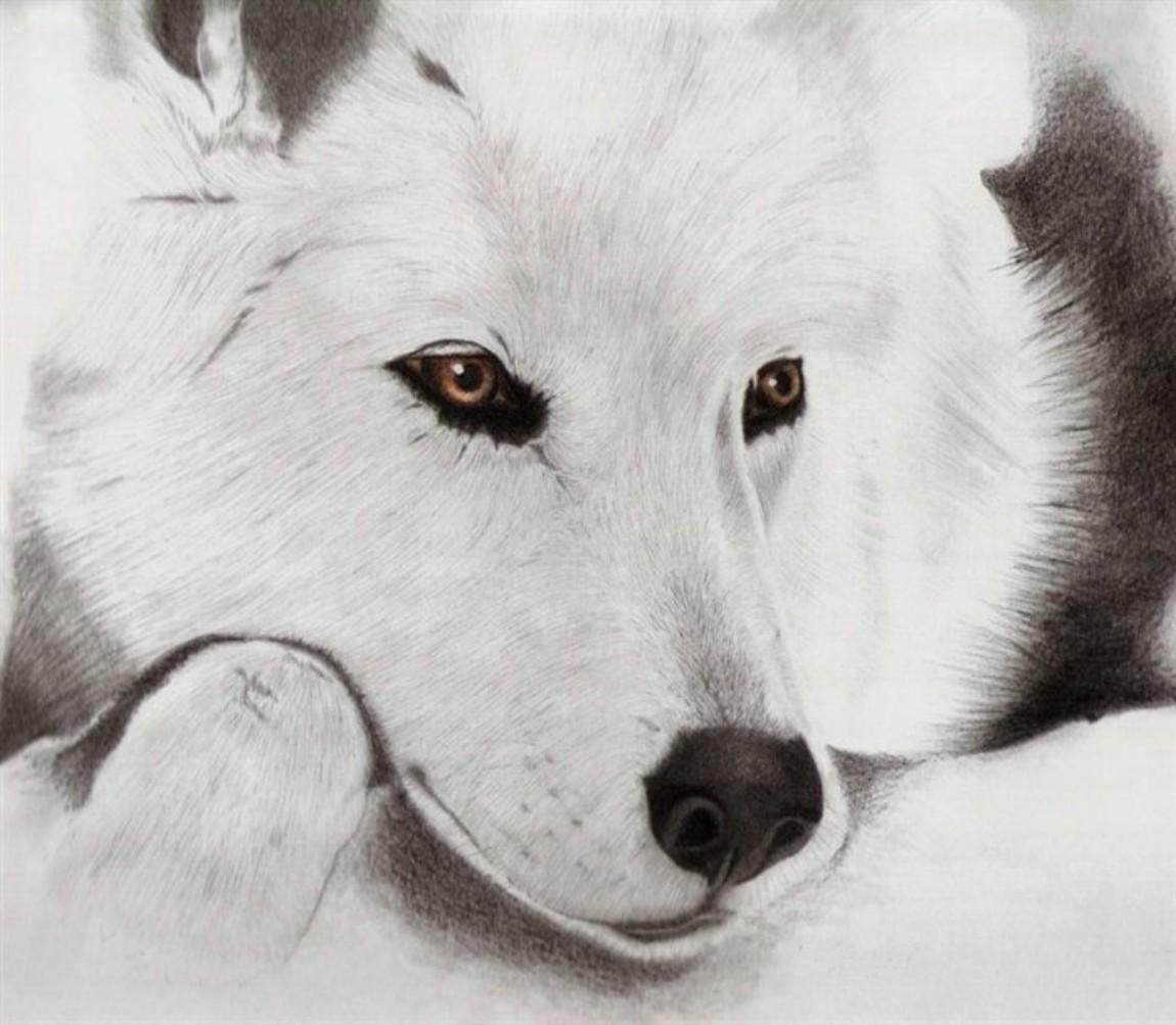 Fond D Ecran Dessin Monochrome Loup Husky Siberien Le Renard