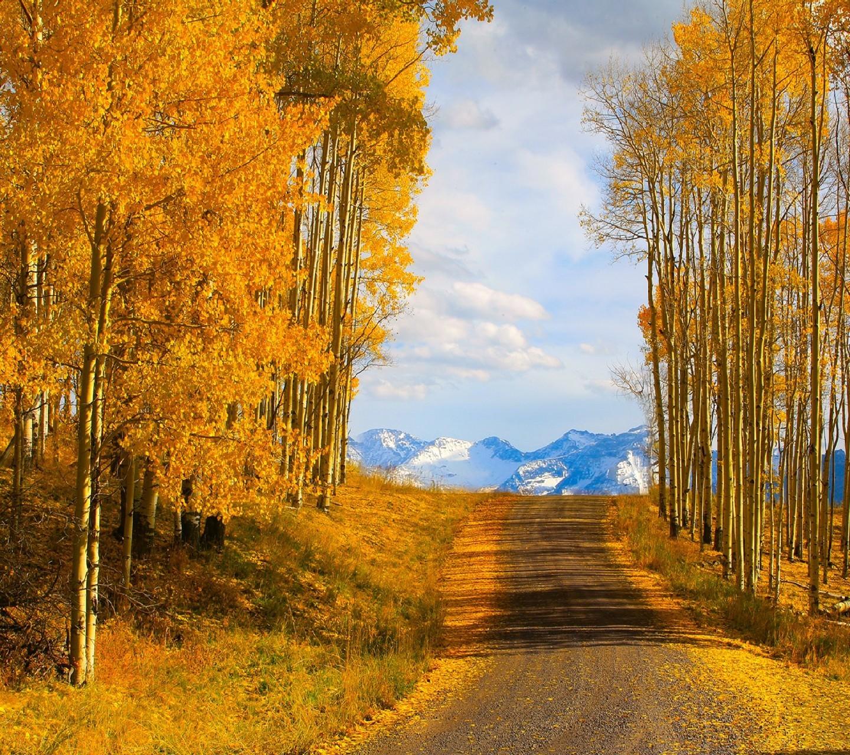 Картинки золото осени, картинку удачи