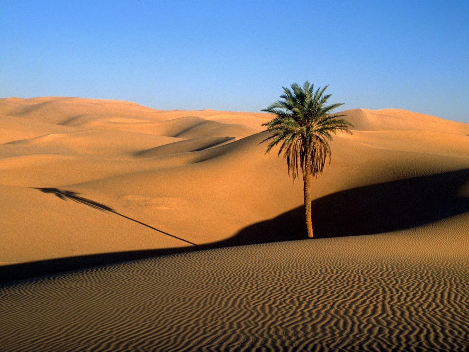 Mais uma relíquia no ebay/OLX etc. - Página 15 Desert_sand_dunes_palm_tree_tree_shade_evening-775392