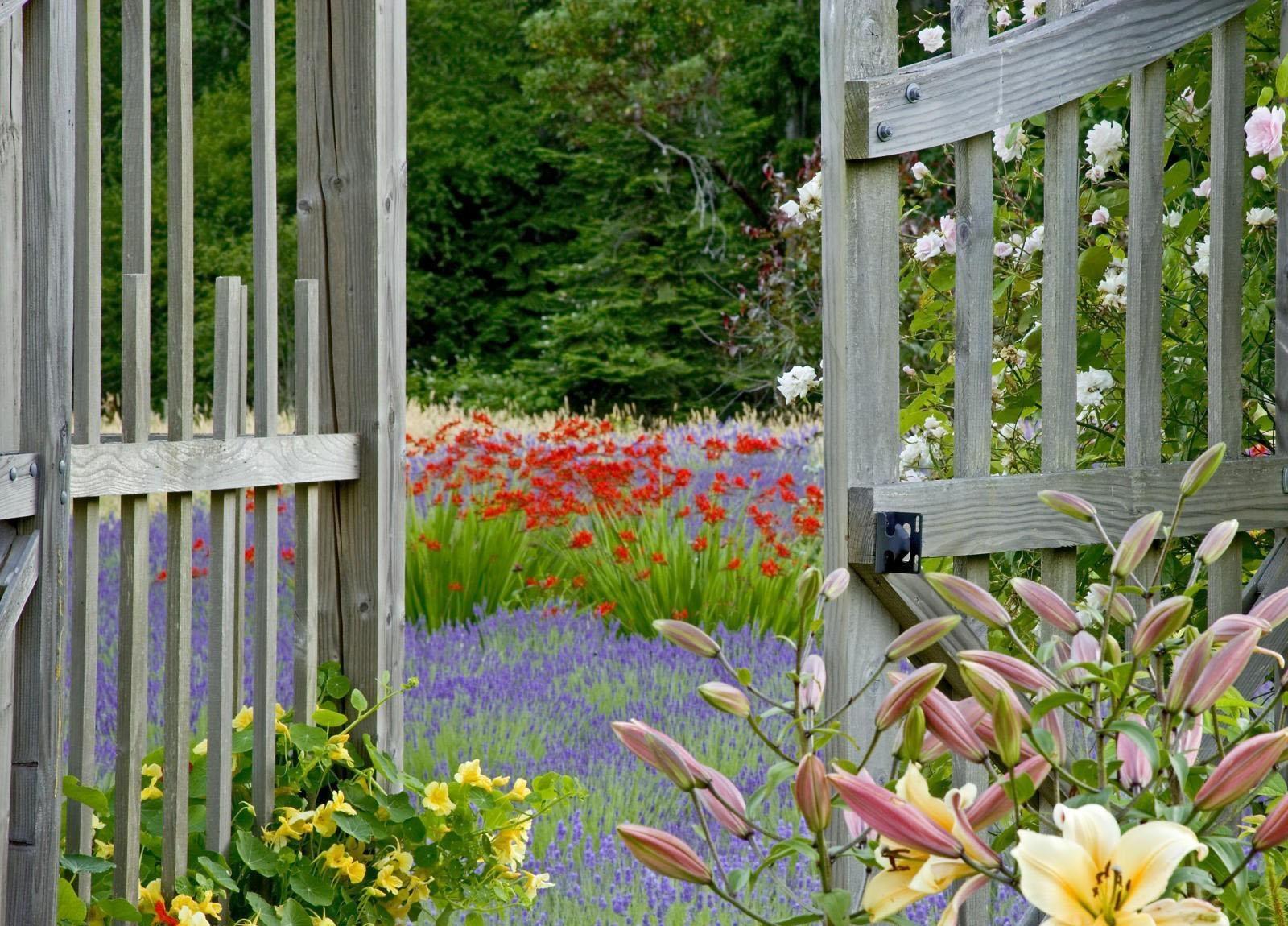 Hintergrundbilder Garten Grün Lavendel Zaun Tore Hütte