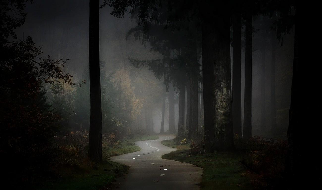 Kết quả hình ảnh cho chụp ảnh thiên nhiên sương mù