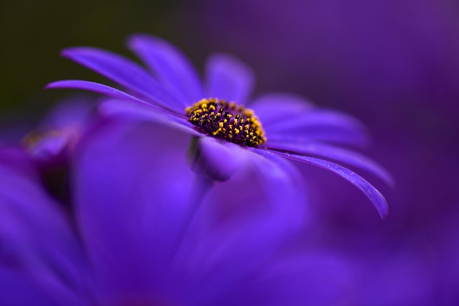 горшки для цветов в интерьере фото