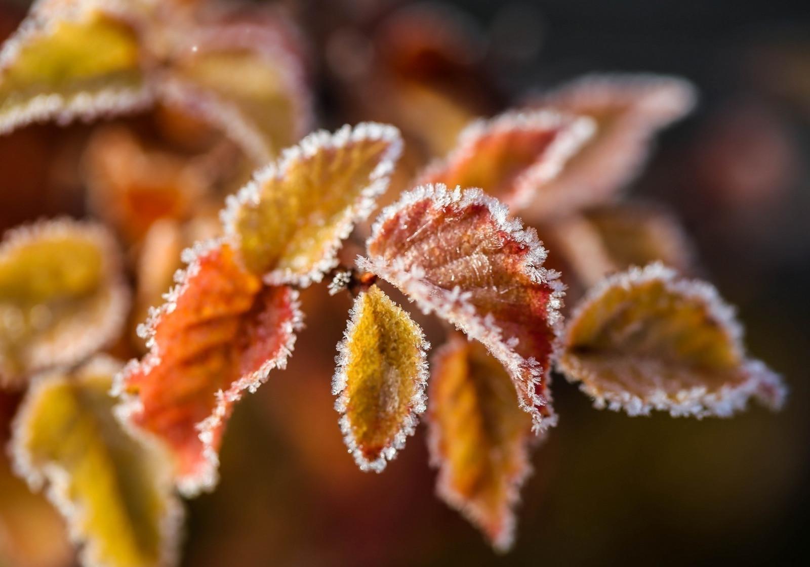 южном осень зима картинки на телефон рассказ