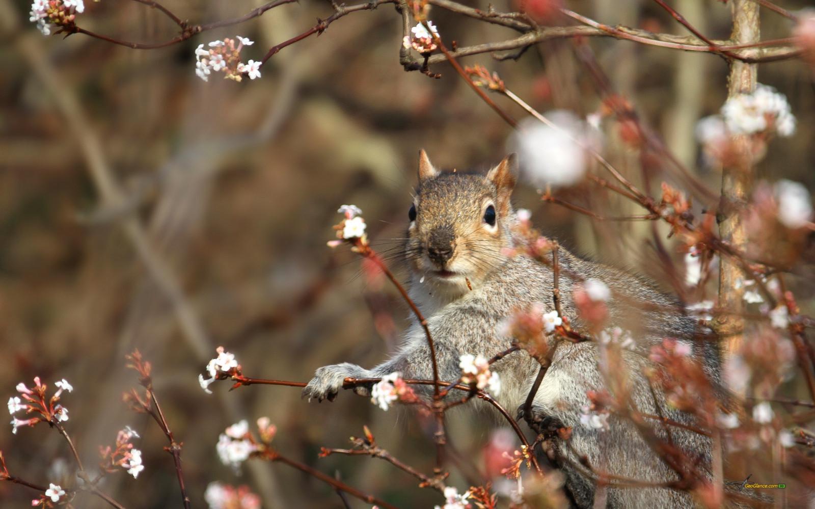 картинки весеннее пробуждение животных поздравок