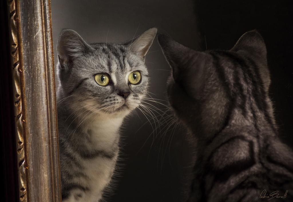 Sfondi fabiob74 specchio gatto gatti riflesso riflessione regina regina occhi luce - Bambini che si guardano allo specchio ...