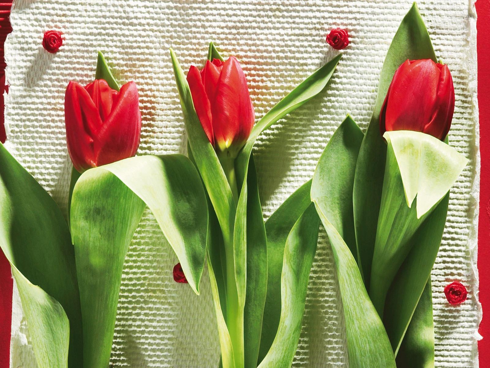 картинка из трех тюльпанов замаскированный