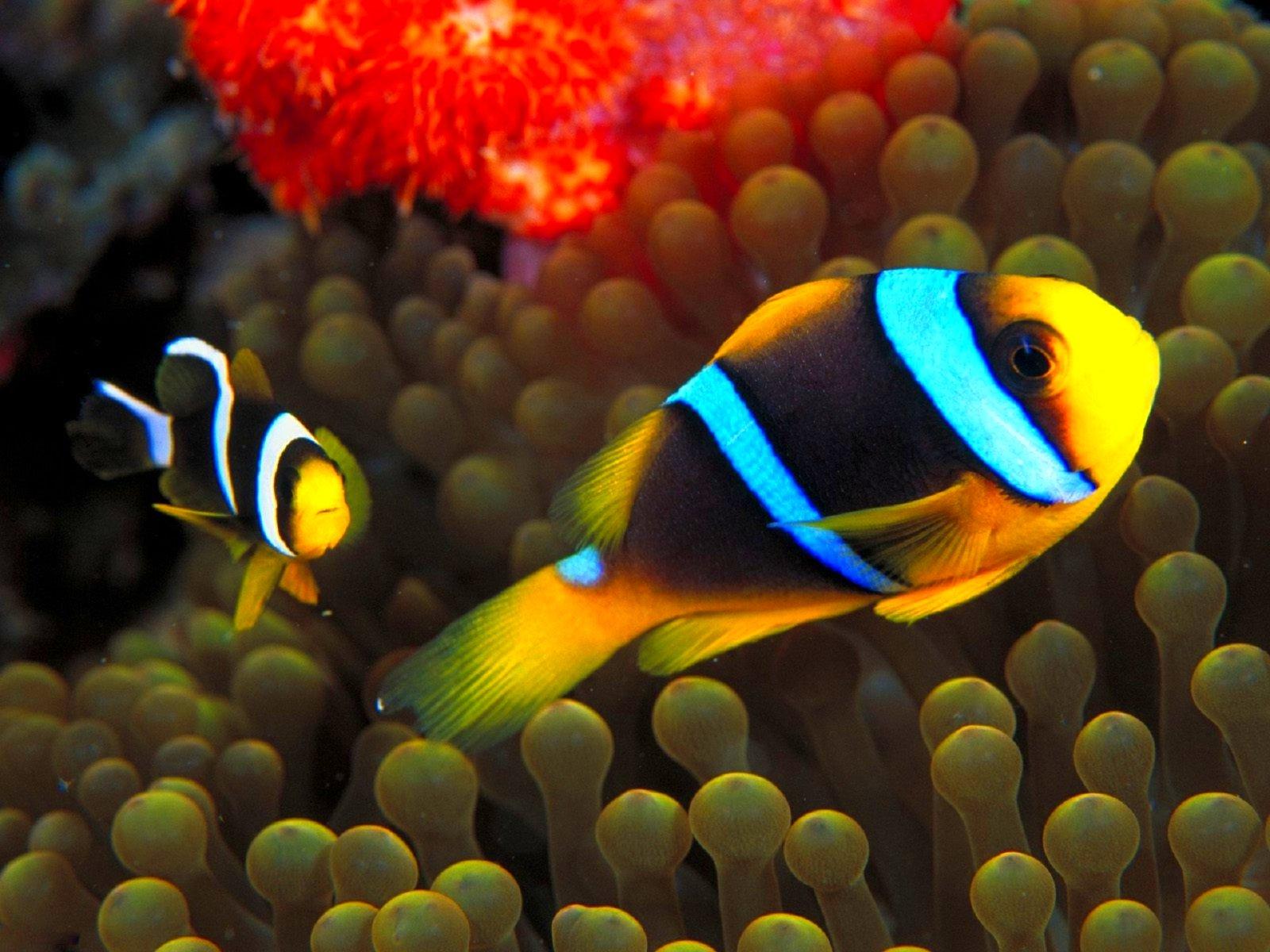 Рыбки в картинках