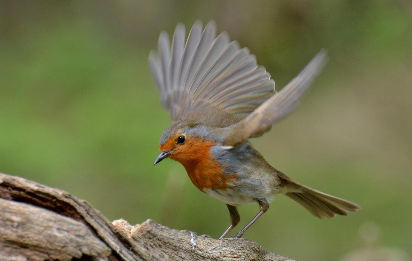 Sfondi natura all 39 aperto ali nikon primavera becco - Primavera uccelli primavera colorazione pagine ...