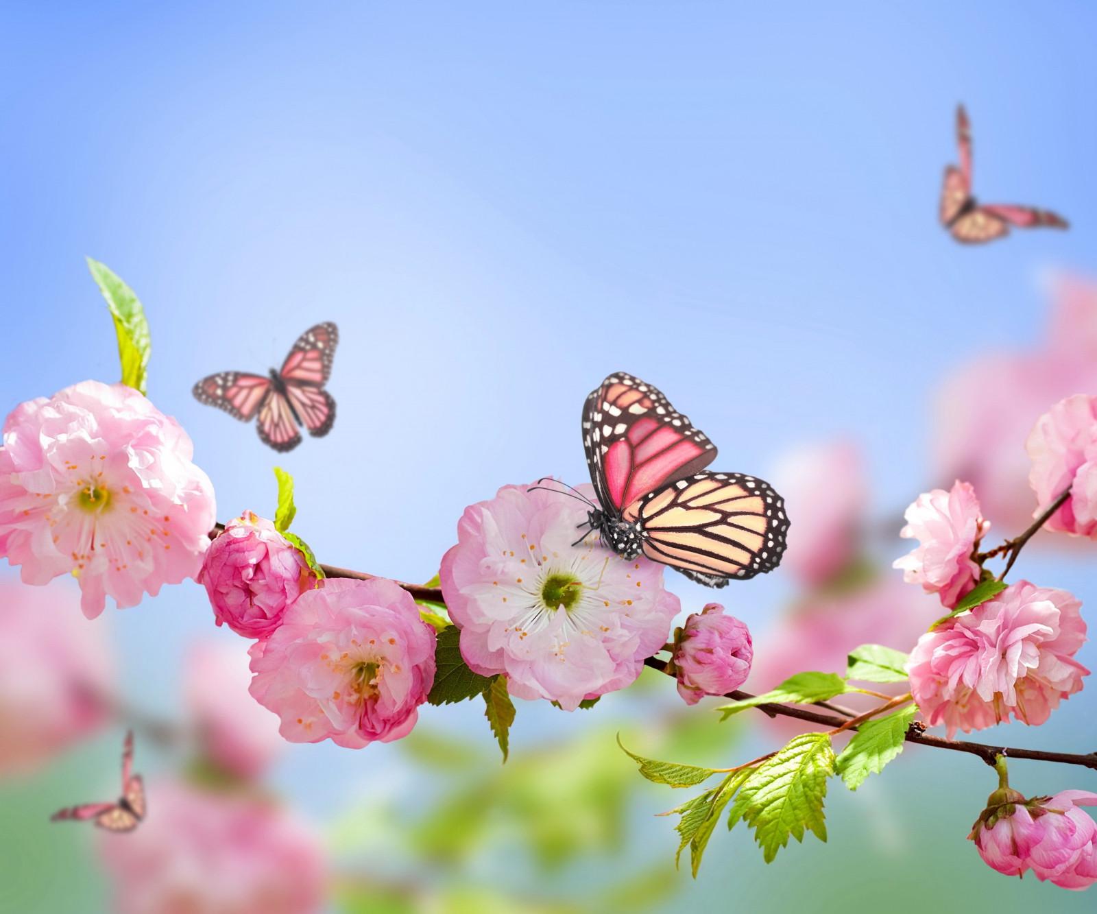 Fond D Ecran Fleurs Roses La Nature Branche Papillon Insecte