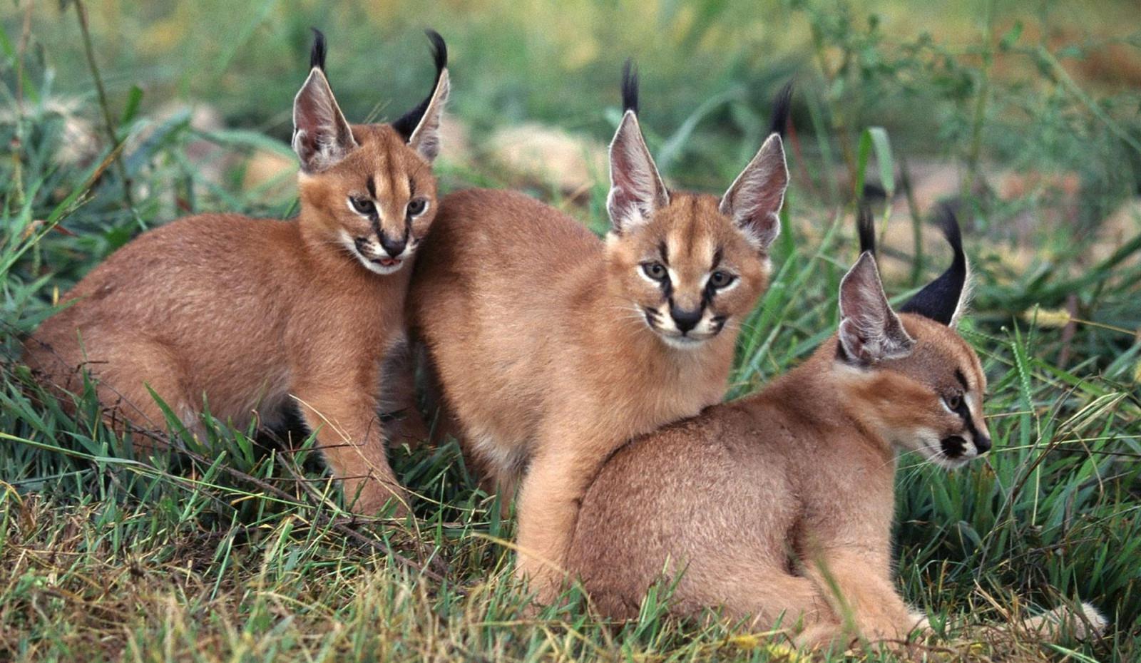 Hintergrundbilder : 1920x1116 px, Tierbilder, Babytiere