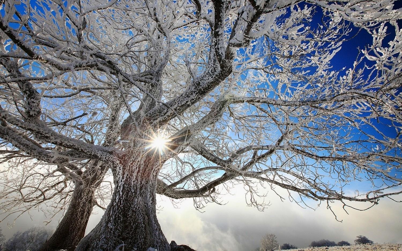 10 Wallpaper  trees, landscape, white, nature, snow, winter, clouds ...