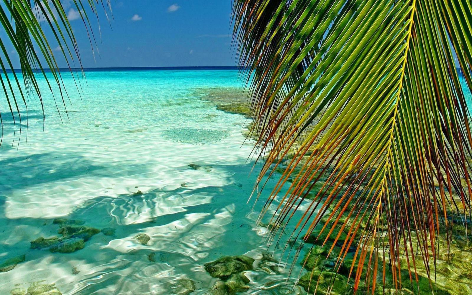 Fond d'écran : lumière du soleil, paysage, feuilles, mer ...