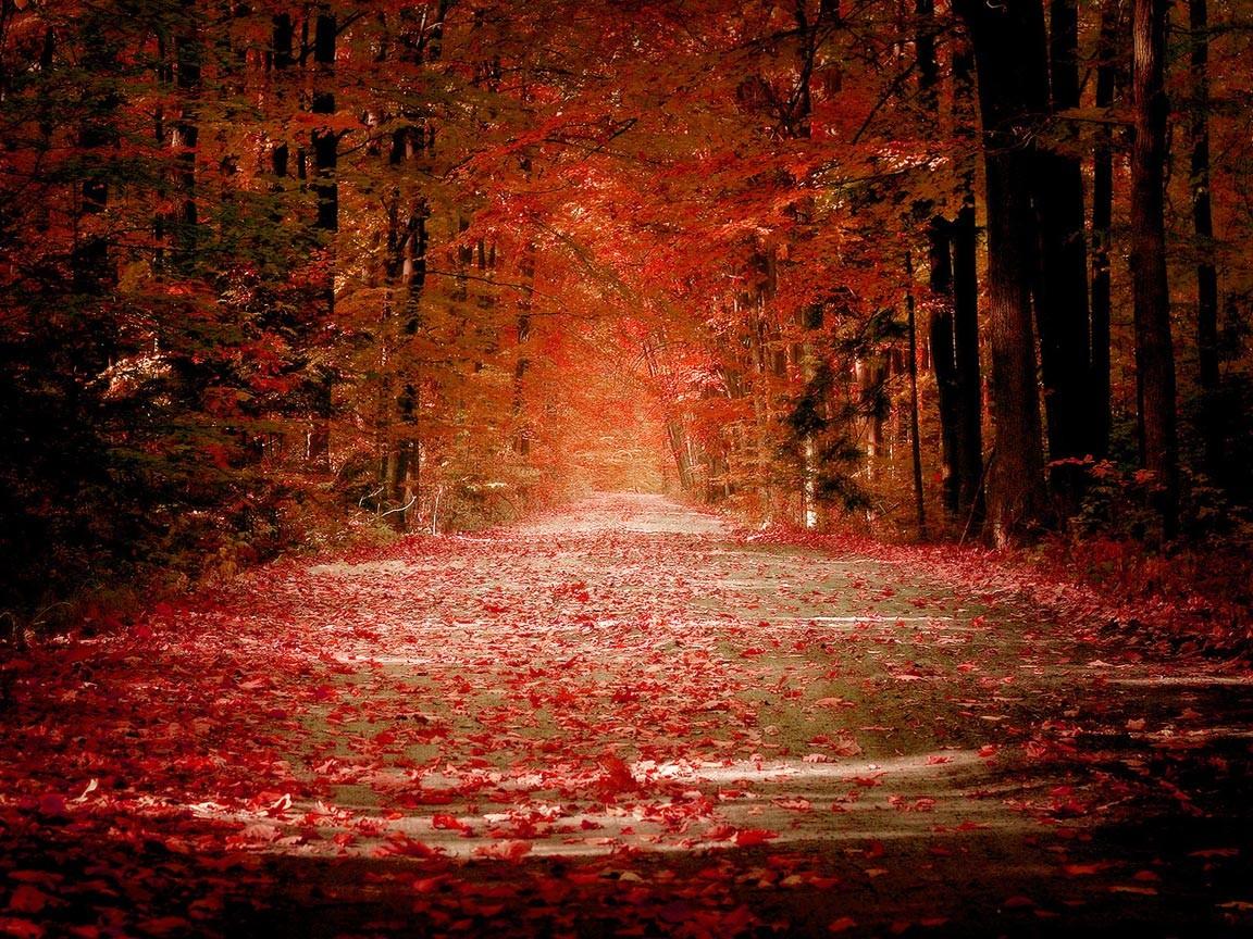 デスクトップ壁紙 日光 木 風景 森林 秋 夜 自然 反射 草