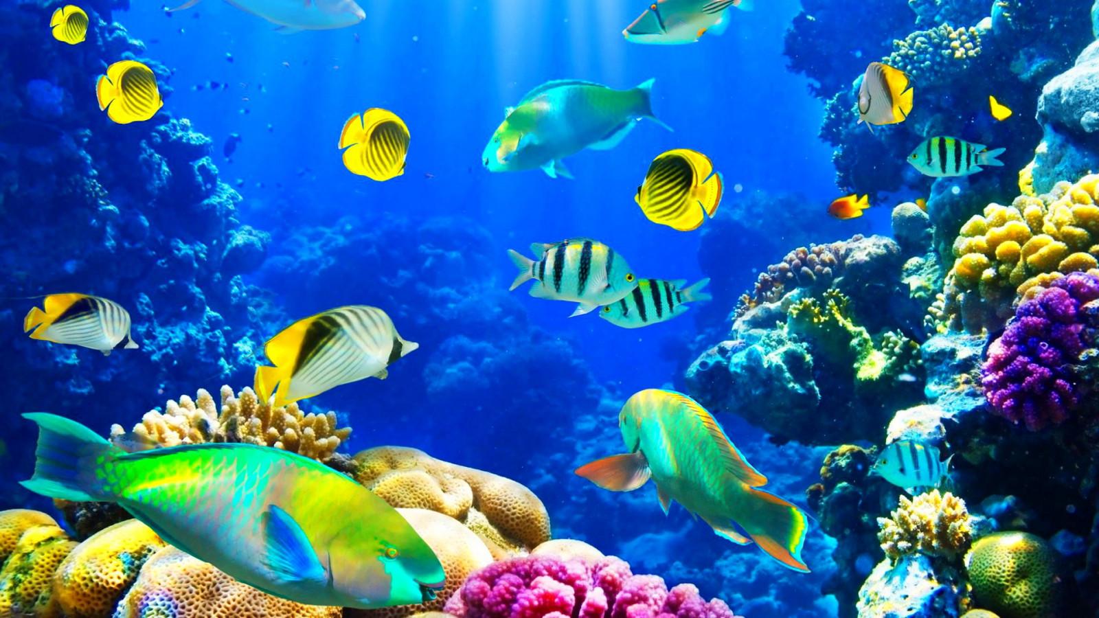 Красивые картинки с рыбками, днем рождения дочка