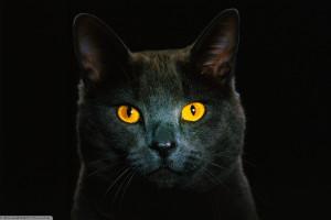 ženy čierna mačička veľký penis čierna mačička