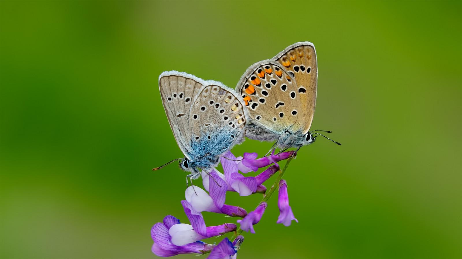 Hintergrundbilder : Natur, Minimalismus, Makro, Insekt, Grün, Muster ...