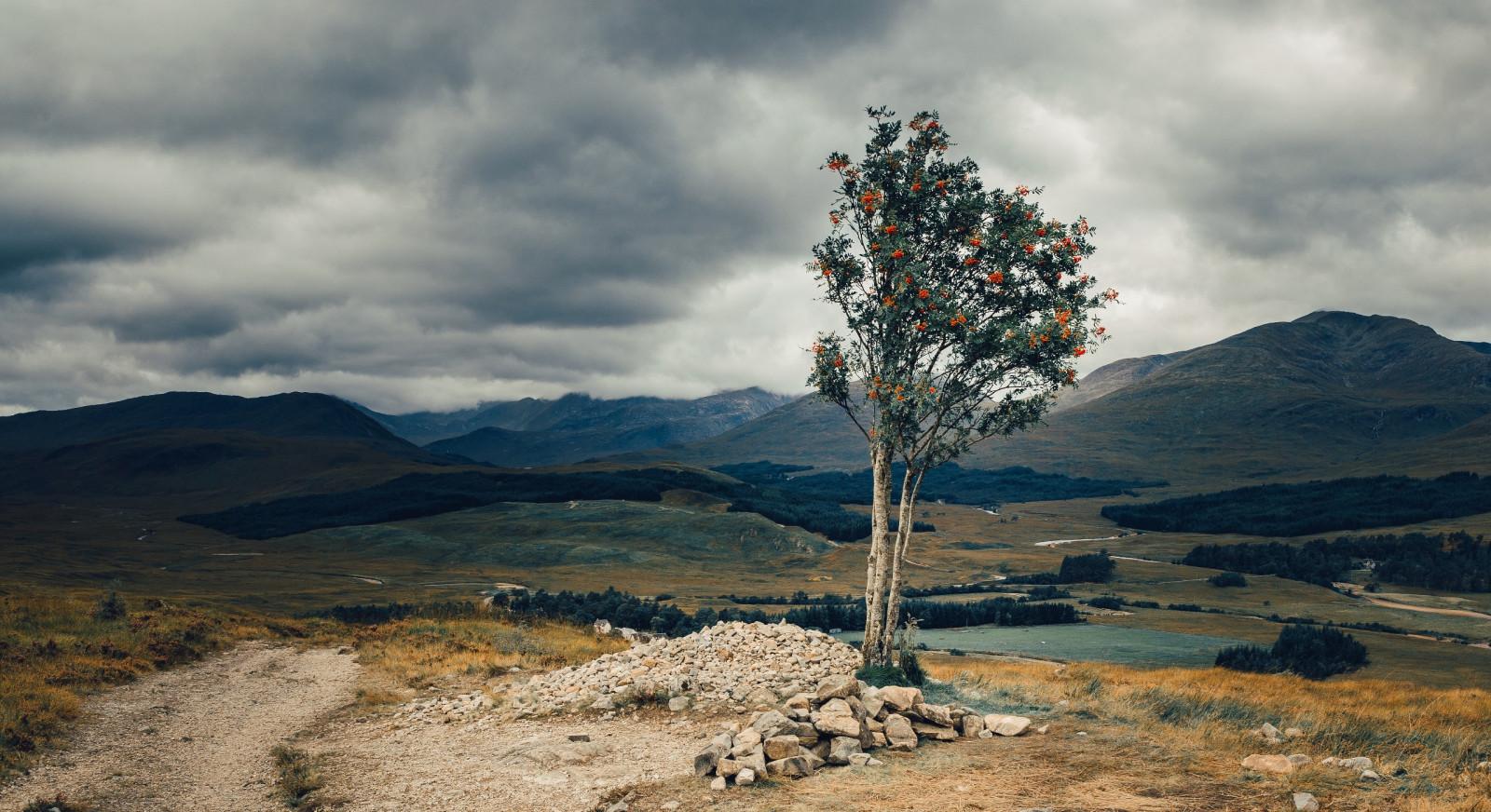 Masaüstü Doğa Gökyüzü Bulutlar Manzara Ağaçlar 2560x1396
