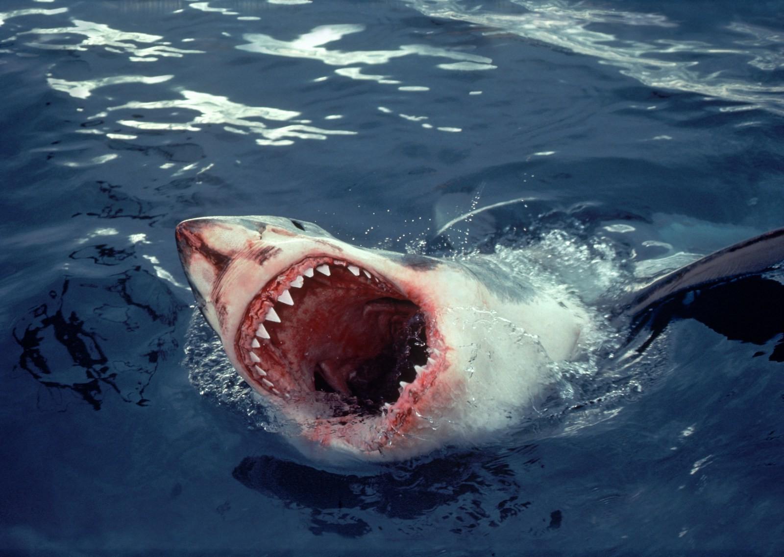 Картинки с акулами страшные, мушкетера красочные