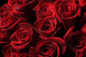 Download 600+ Wallpaper Bunga Hitam Merah HD Terbaik