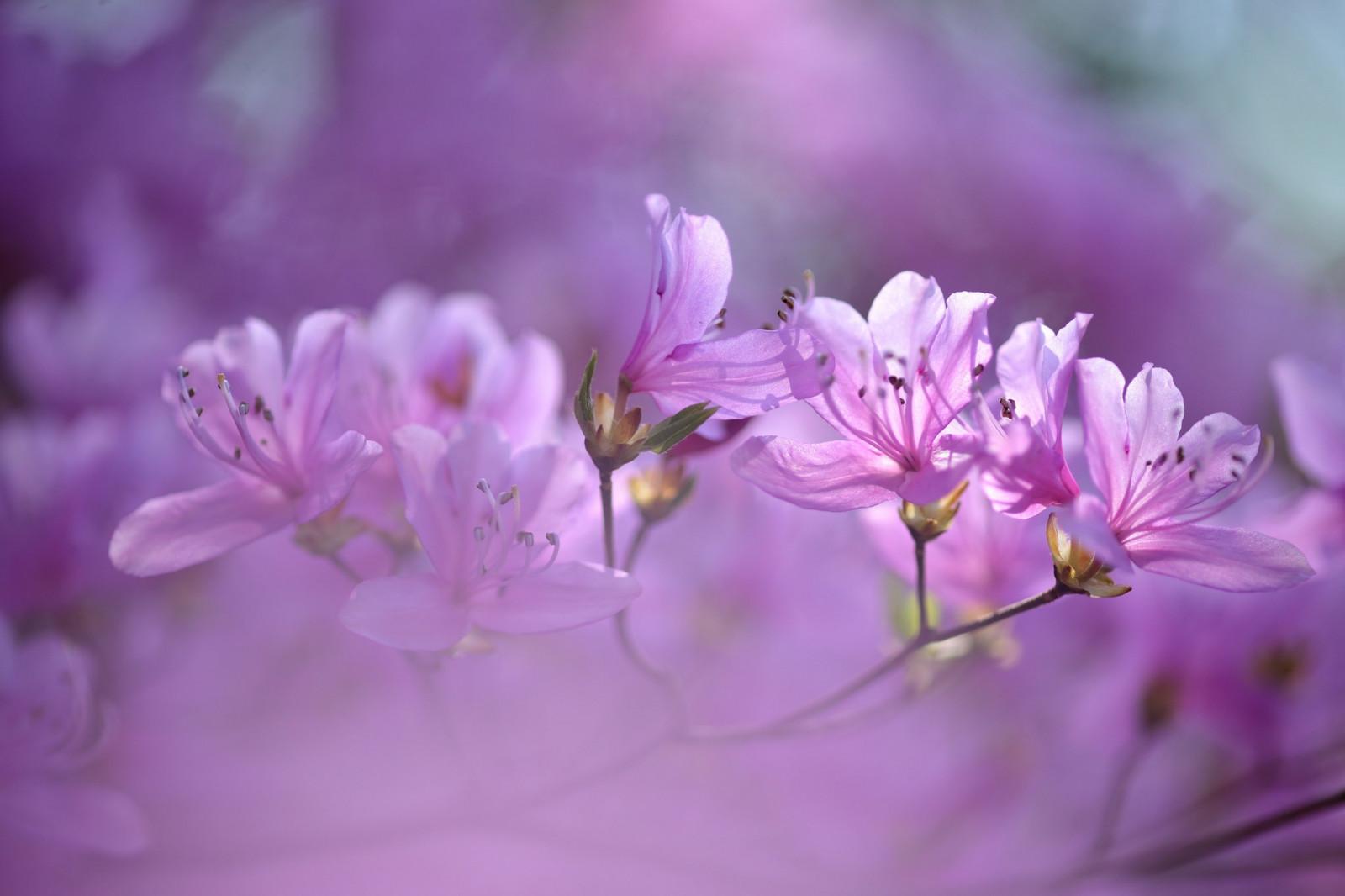 Картинки нежно фиолетовые цветы