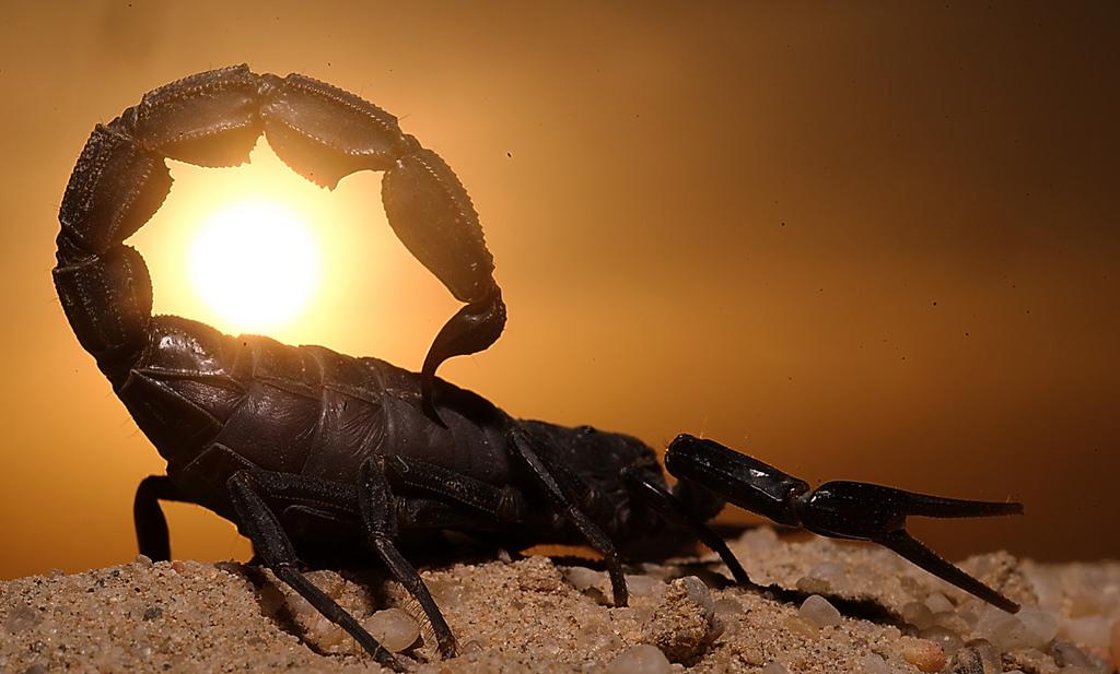 юности супер скорпион картинки вечером энгельсе