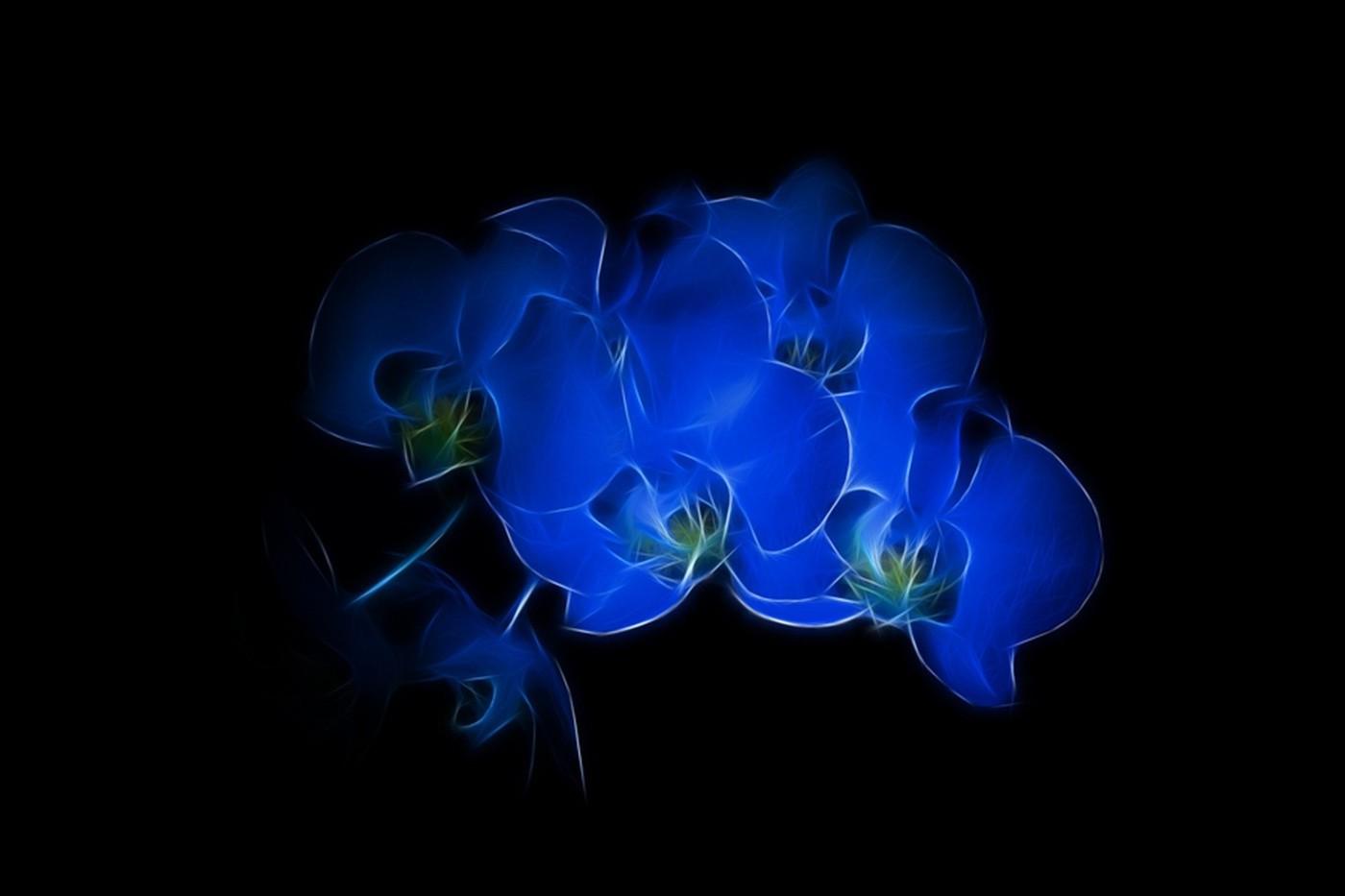 Картинки цветов черные и синие