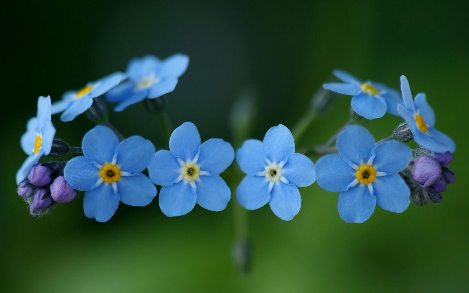Картинки цветочки маленькие красивые, любимой