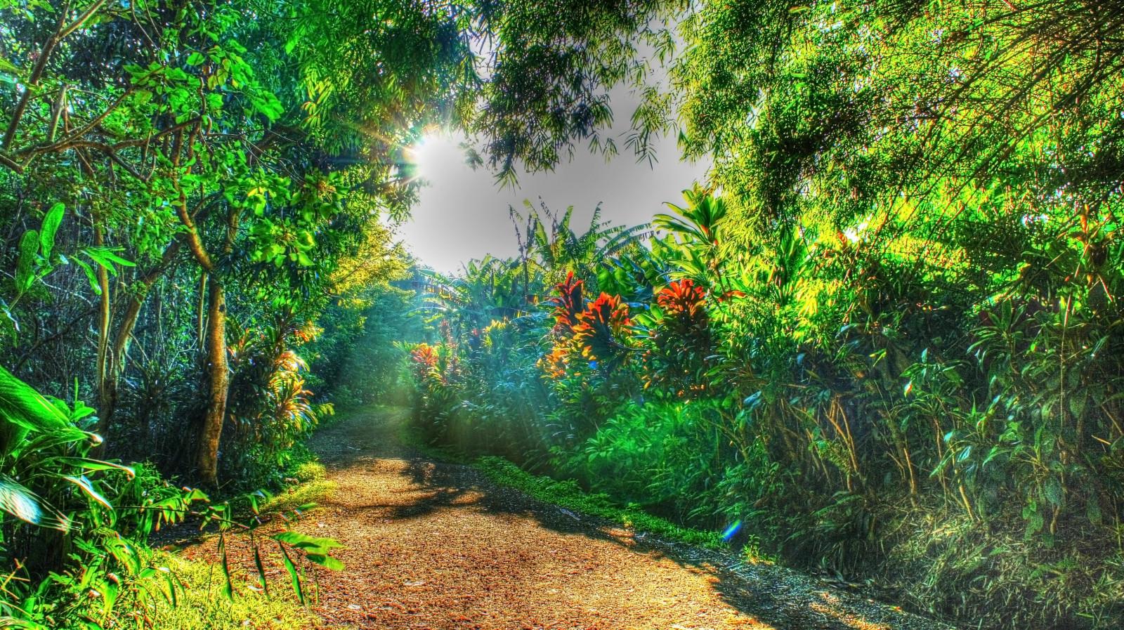 Wallpaper Sunlight Waterfall Garden Nature Beach Green Palm Trees Jungle Hawaii Tropical Water Forest Rainforest Isle Of Maui Tree