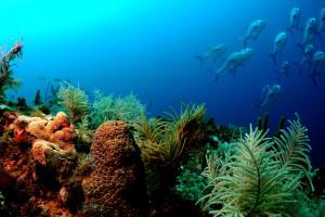hintergrundbilder : 1600x1200 px, tiere, farbe, koralle, fische, ozean, riff, meer, sonnenlicht