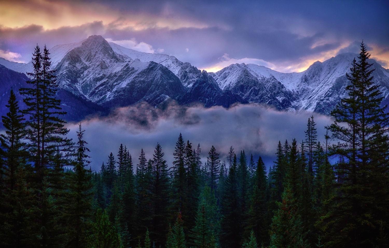 Fondos de pantalla : luz de sol, paisaje, bosque, montañas ...