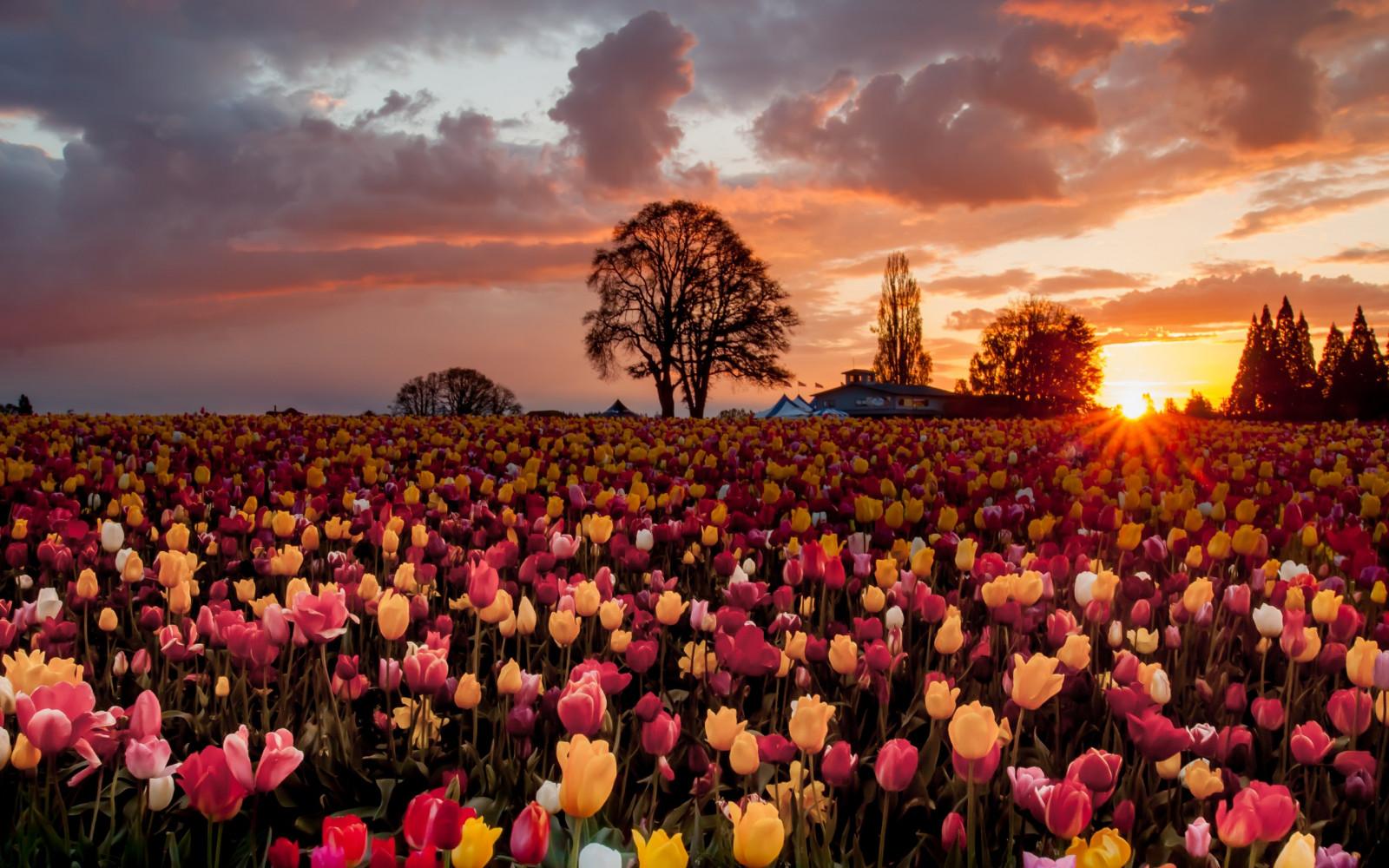 Fond d'écran : paysage, ciel, champ, soir, printemps, fleur, Festival, pétale, Prairie, foule ...