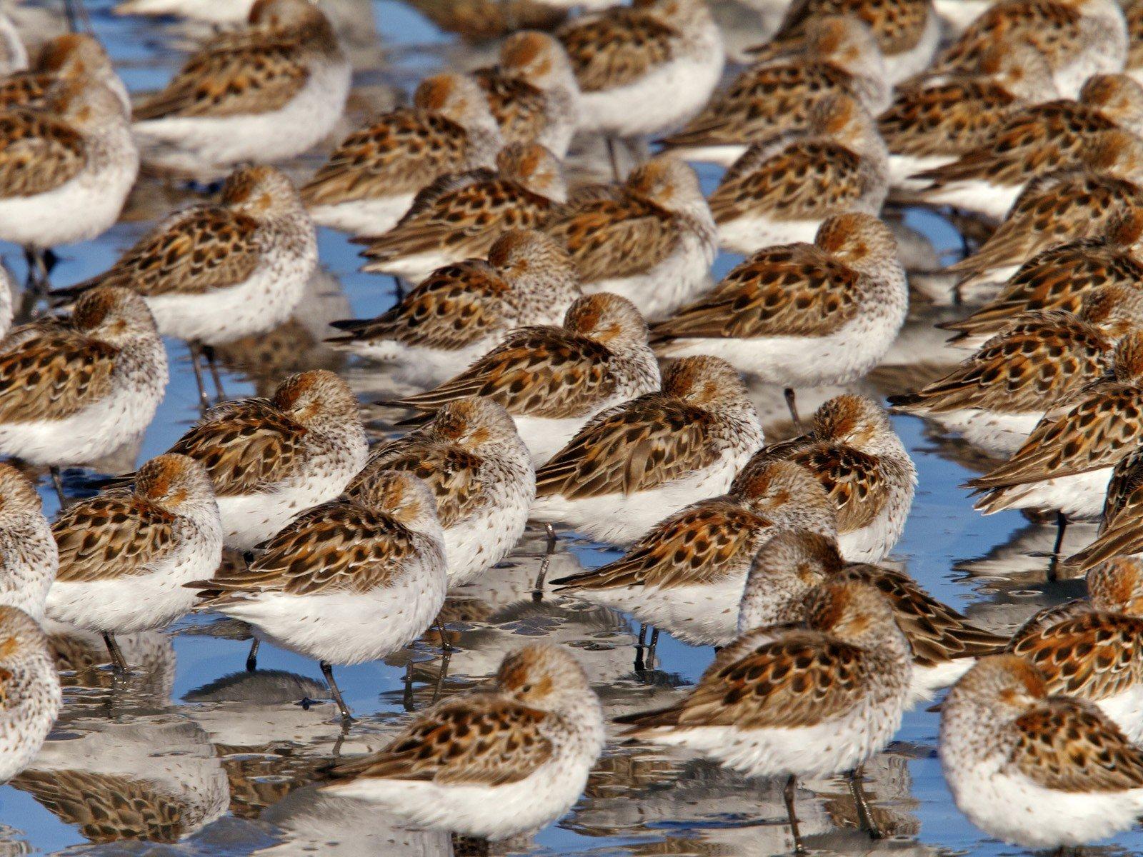 картинки птицы аляски ловли течении