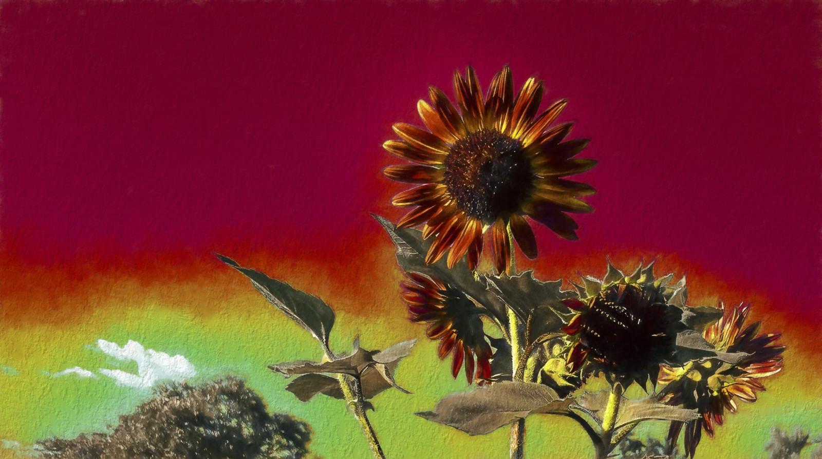 Masaüstü çiçek çiçekli Bitki Gökyüzü Boyama Natürmort
