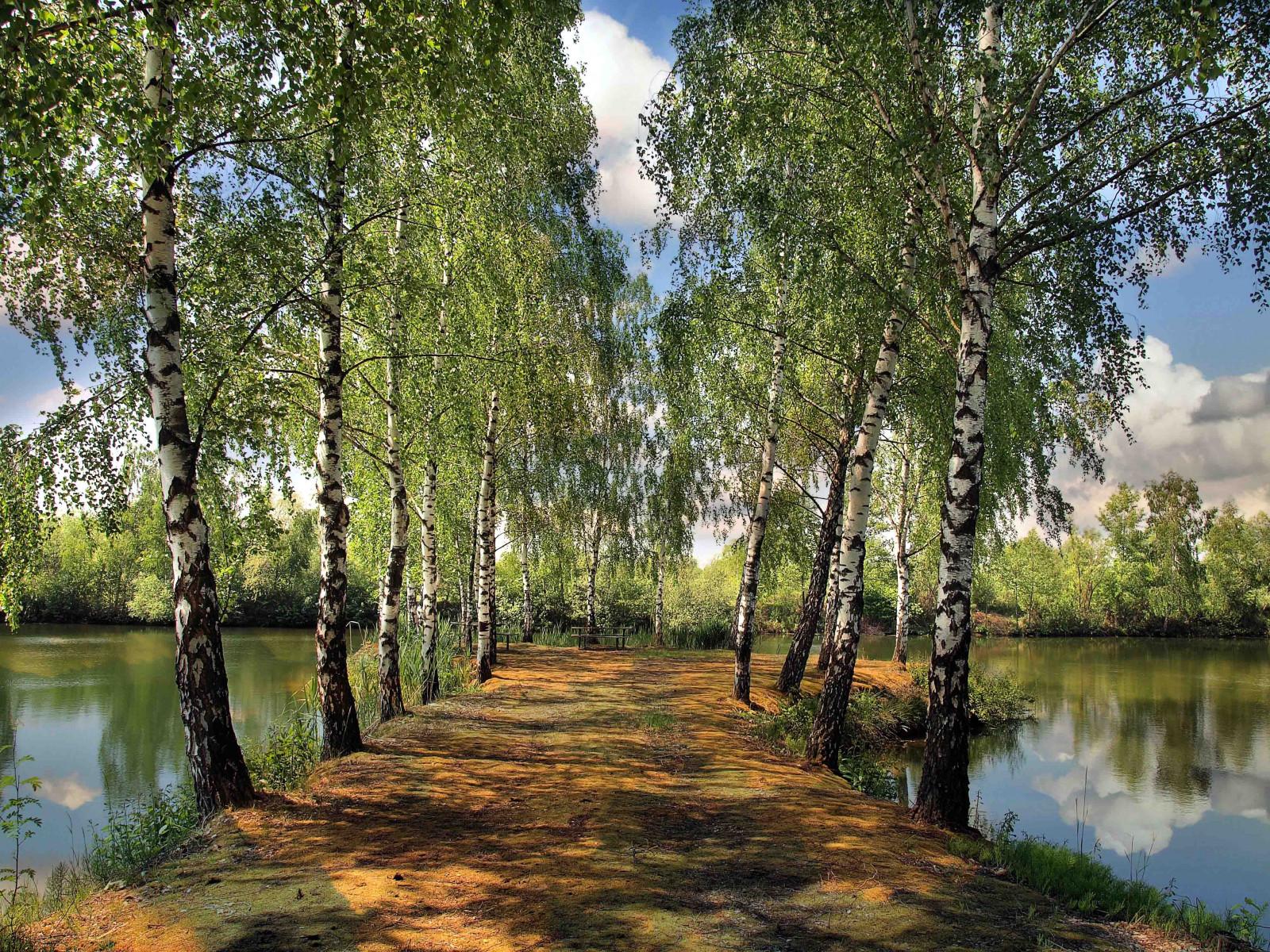 Wallpaper : summer, pond, park, birch, landscape 4032x3024 ...