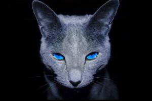 čierna mačička výprask pics