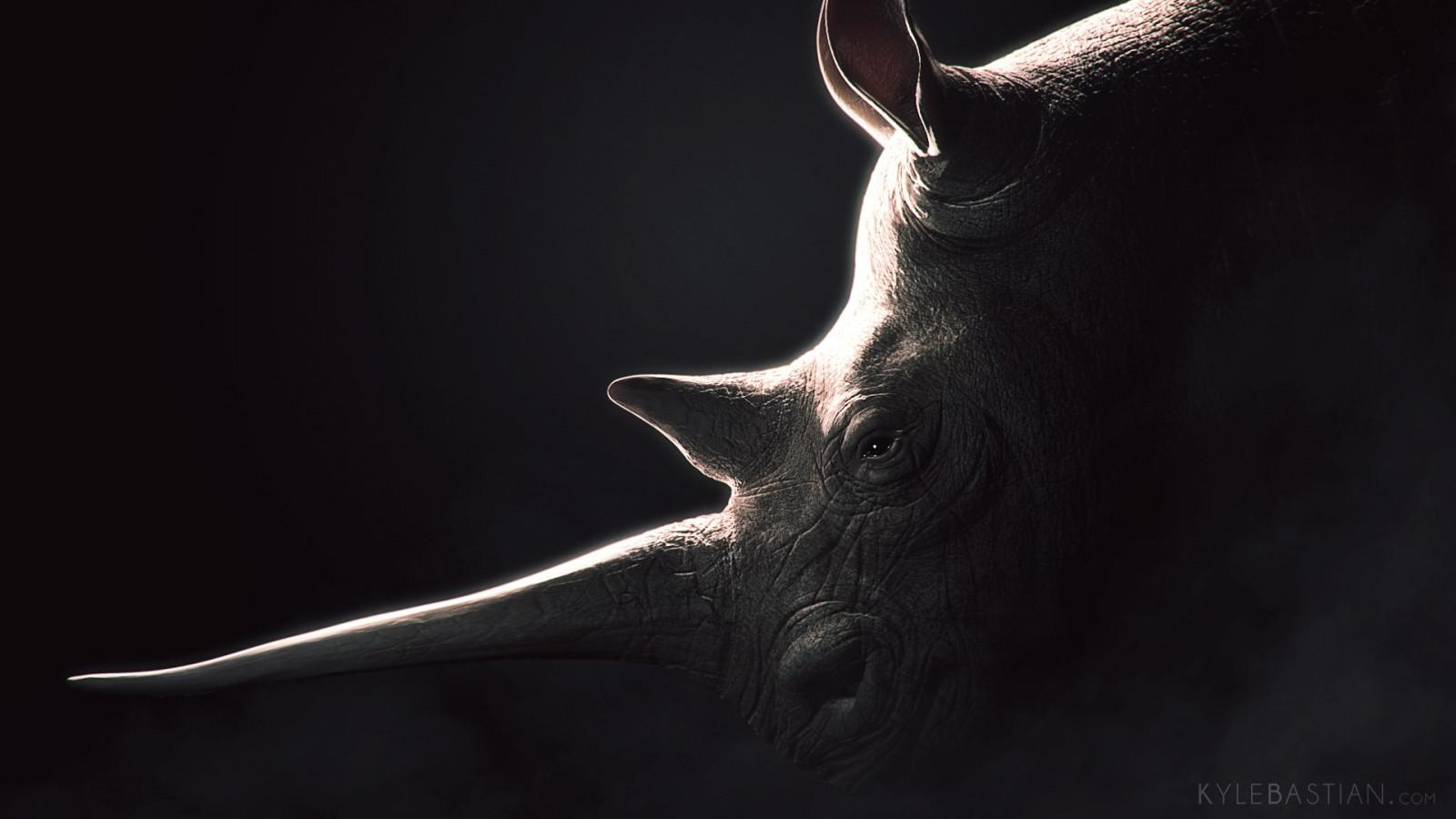 Wallpaper Rhino Head Darkness Bat Computer Wallpaper Close Up