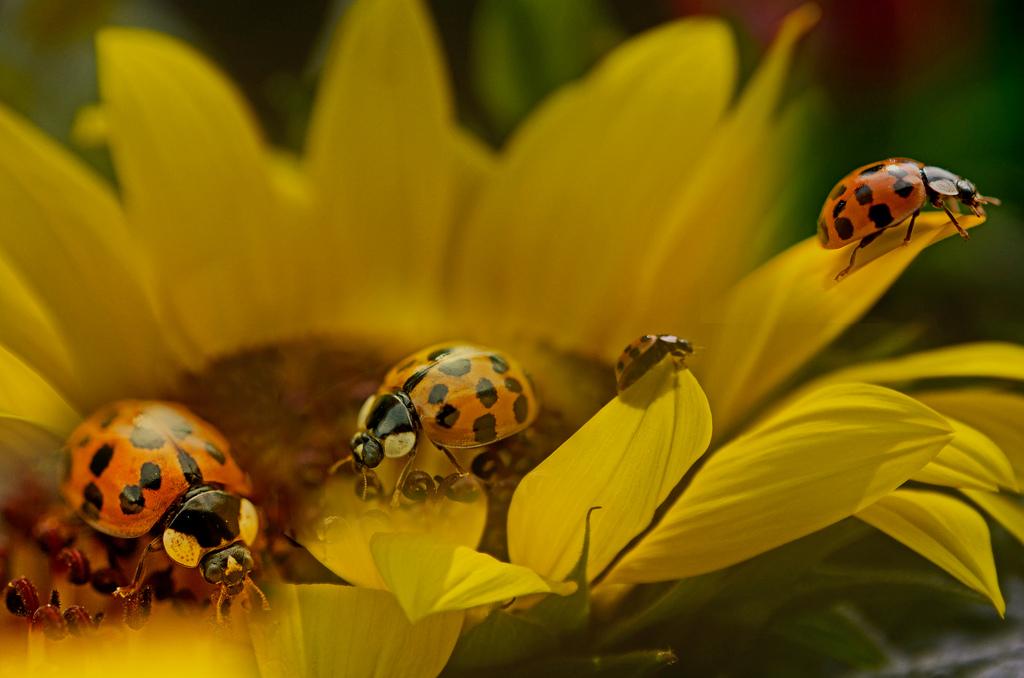 Fond d\'écran : jardin, collage, insecte, jaune, pollen, la ...