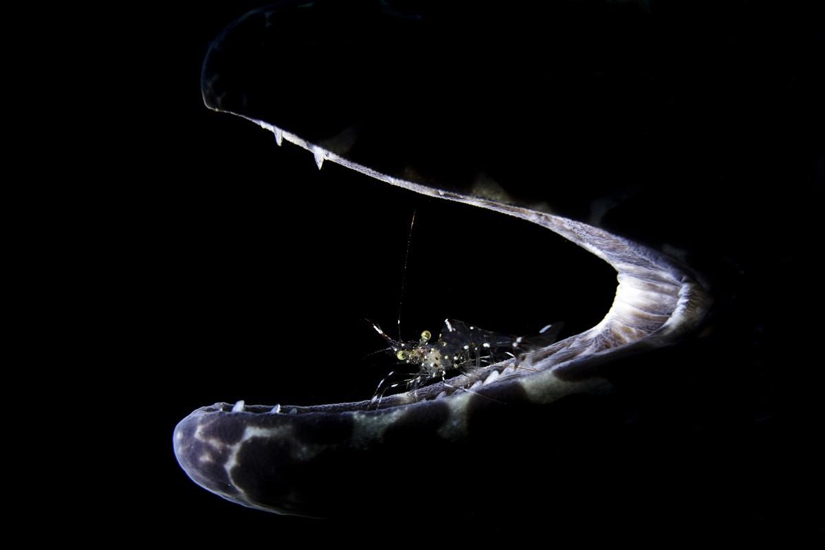 Sfondi Animali Sfondo Nero Pesce Luna Subacqueo Mare Profondo