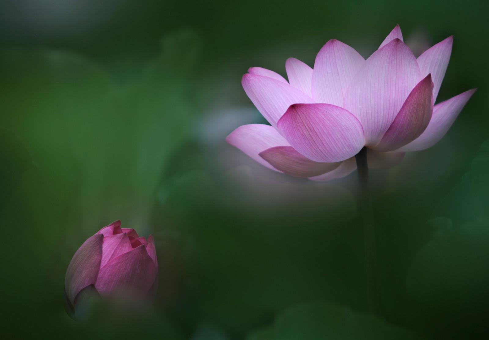 Картинки раскрывшейся цветок
