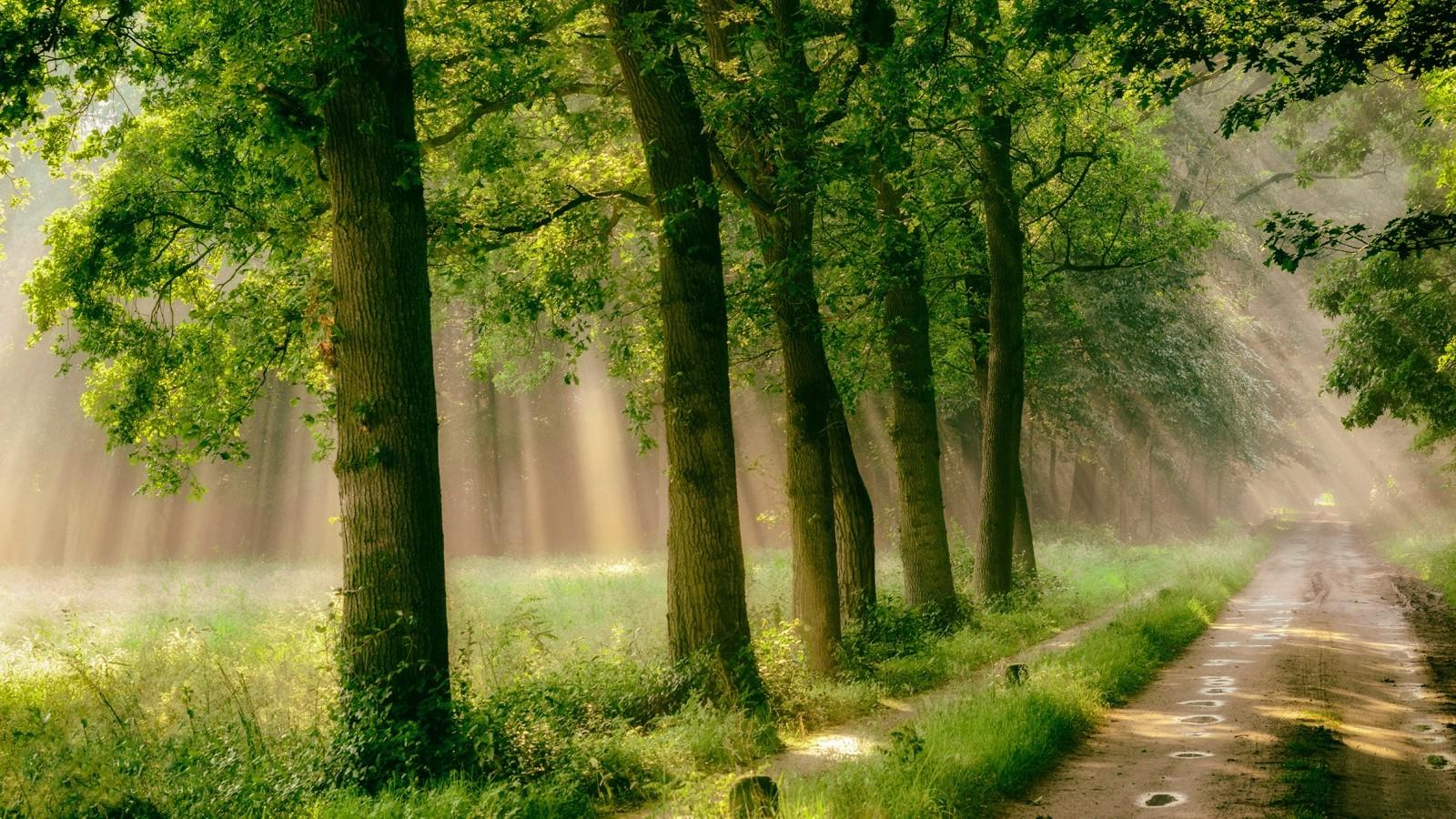 Wallpaper 1600x900 Px Forest Grass Green Landscape
