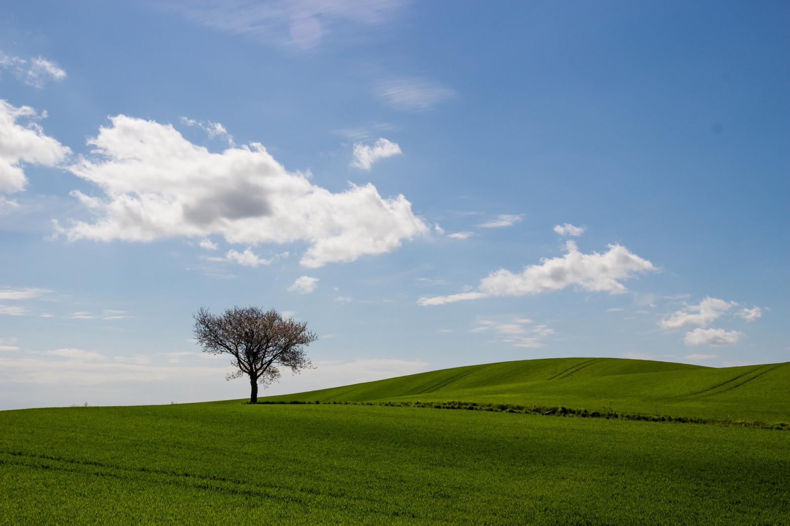 Fond d'écran : lumière du soleil, paysage, colline, la nature, herbe, ciel, champ, vert, horizon ...