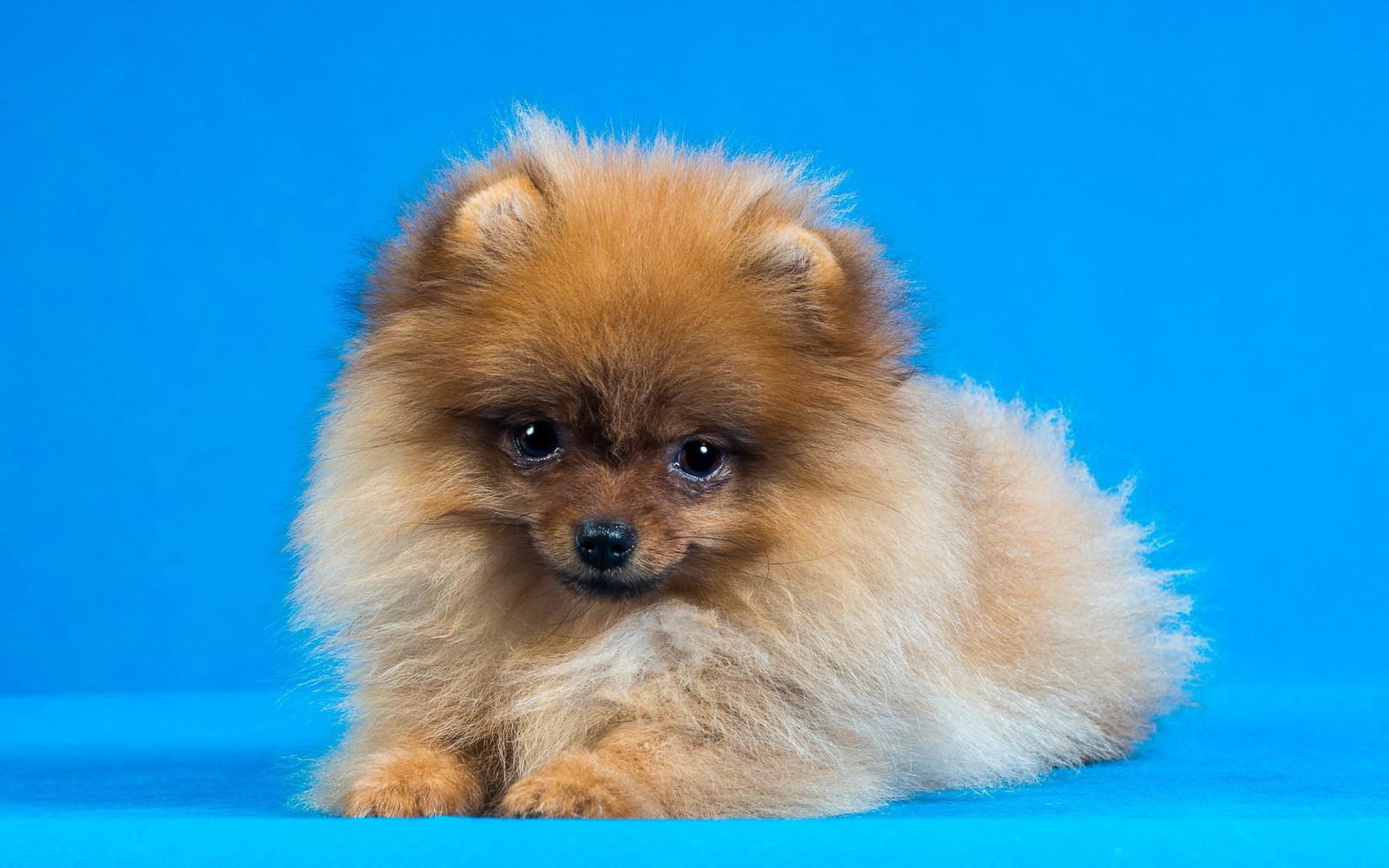 Собачки фото красивые маленький, днем рождения сынуля